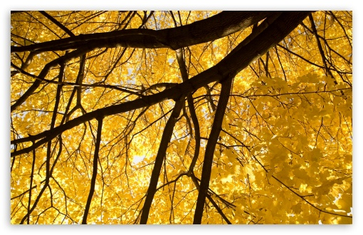 Nice Yellow Leafage HD wallpaper for Wide 16:10 5:3 Widescreen WHXGA WQXGA WUXGA WXGA WGA ; HD 16:9 High Definition WQHD QWXGA 1080p 900p 720p QHD nHD ; Standard 4:3 5:4 3:2 Fullscreen UXGA XGA SVGA QSXGA SXGA DVGA HVGA HQVGA devices ( Apple PowerBook G4 iPhone 4 3G 3GS iPod Touch ) ; Tablet 1:1 ; iPad 1/2/Mini ; Mobile 4:3 5:3 3:2 16:9 5:4 - UXGA XGA SVGA WGA DVGA HVGA HQVGA devices ( Apple PowerBook G4 iPhone 4 3G 3GS iPod Touch ) WQHD QWXGA 1080p 900p 720p QHD nHD QSXGA SXGA ; Dual 16:10 5:3 4:3 5:4 WHXGA WQXGA WUXGA WXGA WGA UXGA XGA SVGA QSXGA SXGA ;