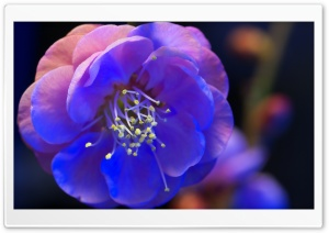 Night Blossom HD Wide Wallpaper for Widescreen