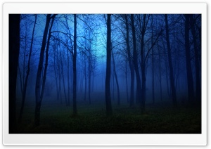 Night In The Forest HD Wide Wallpaper for Widescreen
