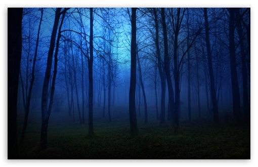 Night In The Forest HD wallpaper for Wide 16:10 5:3 Widescreen WHXGA WQXGA WUXGA WXGA WGA ; HD 16:9 High Definition WQHD QWXGA 1080p 900p 720p QHD nHD ; Standard 4:3 5:4 3:2 Fullscreen UXGA XGA SVGA QSXGA SXGA DVGA HVGA HQVGA devices ( Apple PowerBook G4 iPhone 4 3G 3GS iPod Touch ) ; Tablet 1:1 ; iPad 1/2/Mini ; Mobile 4:3 5:3 3:2 16:9 5:4 - UXGA XGA SVGA WGA DVGA HVGA HQVGA devices ( Apple PowerBook G4 iPhone 4 3G 3GS iPod Touch ) WQHD QWXGA 1080p 900p 720p QHD nHD QSXGA SXGA ; Dual 16:10 5:3 16:9 4:3 5:4 WHXGA WQXGA WUXGA WXGA WGA WQHD QWXGA 1080p 900p 720p QHD nHD UXGA XGA SVGA QSXGA SXGA ;