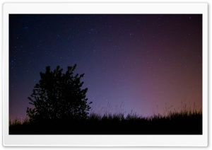 Night Sky with Tree HD Wide Wallpaper for Widescreen