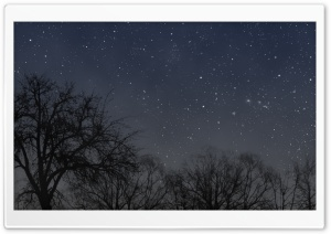 Night Tree HD Wide Wallpaper for Widescreen
