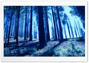 Night Trees Blue HD Wide Wallpaper for Widescreen