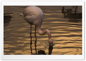 Night with Flamingo HD Wide Wallpaper for Widescreen