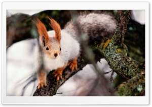Nimble Squirrel Ultra HD Wallpaper for 4K UHD Widescreen desktop, tablet & smartphone
