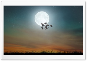 Nocturnal Migration of Birds, Full Moon HD Wide Wallpaper for 4K UHD Widescreen desktop & smartphone