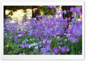 Northern Flower HD Wide Wallpaper for Widescreen