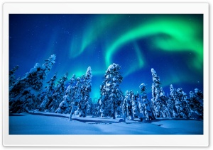 Northern Lights Over Forest, Winter HD Wide Wallpaper for 4K UHD Widescreen desktop & smartphone