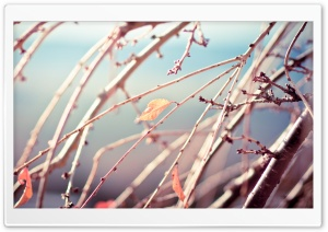 Not Another Winter HD Wide Wallpaper for Widescreen