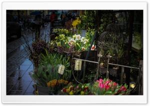 Not the best Spring Weather Ultra HD Wallpaper for 4K UHD Widescreen desktop, tablet & smartphone