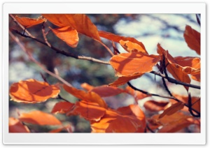 November HD Wide Wallpaper for Widescreen