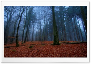 November In Forest HD Wide Wallpaper for Widescreen