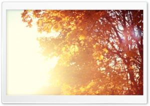 November Sun HD Wide Wallpaper for Widescreen