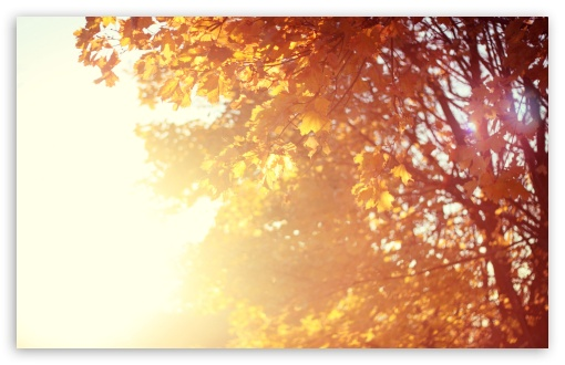 November Sun HD wallpaper for Wide 16:10 5:3 Widescreen WHXGA WQXGA WUXGA WXGA WGA ; HD 16:9 High Definition WQHD QWXGA 1080p 900p 720p QHD nHD ; UHD 16:9 WQHD QWXGA 1080p 900p 720p QHD nHD ; Standard 4:3 5:4 3:2 Fullscreen UXGA XGA SVGA QSXGA SXGA DVGA HVGA HQVGA devices ( Apple PowerBook G4 iPhone 4 3G 3GS iPod Touch ) ; iPad 1/2/Mini ; Mobile 4:3 5:3 3:2 16:9 5:4 - UXGA XGA SVGA WGA DVGA HVGA HQVGA devices ( Apple PowerBook G4 iPhone 4 3G 3GS iPod Touch ) WQHD QWXGA 1080p 900p 720p QHD nHD QSXGA SXGA ;