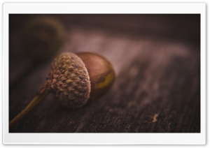Nut HD Wide Wallpaper for Widescreen