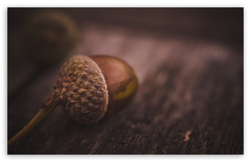 Nut ❤ 4K UHD Wallpaper for Wide 16:10 5:3 Widescreen WHXGA WQXGA WUXGA WXGA WGA ; 4K UHD 16:9 Ultra High Definition 2160p 1440p 1080p 900p 720p ; UHD 16:9 2160p 1440p 1080p 900p 720p ; Standard 4:3 5:4 3:2 Fullscreen UXGA XGA SVGA QSXGA SXGA DVGA HVGA HQVGA ( Apple PowerBook G4 iPhone 4 3G 3GS iPod Touch ) ; Tablet 1:1 ; iPad 1/2/Mini ; Mobile 4:3 5:3 3:2 16:9 5:4 - UXGA XGA SVGA WGA DVGA HVGA HQVGA ( Apple PowerBook G4 iPhone 4 3G 3GS iPod Touch ) 2160p 1440p 1080p 900p 720p QSXGA SXGA ; Dual 4:3 5:4 UXGA XGA SVGA QSXGA SXGA ;