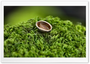 Nut Shell Close Up HD Wide Wallpaper for Widescreen