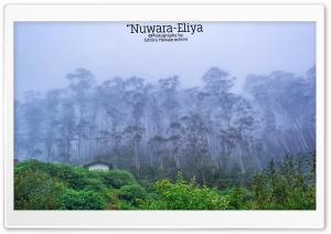 Nuwara-Eliya - Sri Lanka HD Wide Wallpaper for 4K UHD Widescreen desktop & smartphone