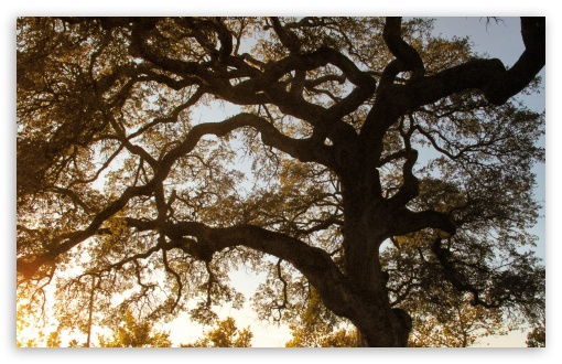 Oak HD wallpaper for Wide 16:10 5:3 Widescreen WHXGA WQXGA WUXGA WXGA WGA ; HD 16:9 High Definition WQHD QWXGA 1080p 900p 720p QHD nHD ; Standard 4:3 5:4 3:2 Fullscreen UXGA XGA SVGA QSXGA SXGA DVGA HVGA HQVGA devices ( Apple PowerBook G4 iPhone 4 3G 3GS iPod Touch ) ; Tablet 1:1 ; iPad 1/2/Mini ; Mobile 4:3 5:3 3:2 16:9 5:4 - UXGA XGA SVGA WGA DVGA HVGA HQVGA devices ( Apple PowerBook G4 iPhone 4 3G 3GS iPod Touch ) WQHD QWXGA 1080p 900p 720p QHD nHD QSXGA SXGA ; Dual 16:10 5:3 16:9 4:3 5:4 WHXGA WQXGA WUXGA WXGA WGA WQHD QWXGA 1080p 900p 720p QHD nHD UXGA XGA SVGA QSXGA SXGA ;