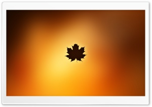Oak Leaf Background HD Wide Wallpaper for Widescreen