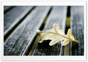 Oak Leaf On Wooden Bench HD Wide Wallpaper for Widescreen