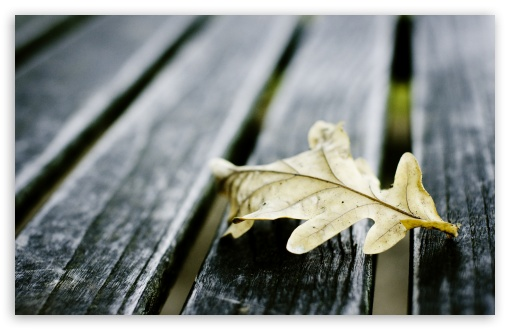 Oak Leaf On Wooden Bench ❤ 4K UHD Wallpaper for Wide 16:10 5:3 Widescreen WHXGA WQXGA WUXGA WXGA WGA ; 4K UHD 16:9 Ultra High Definition 2160p 1440p 1080p 900p 720p ; UHD 16:9 2160p 1440p 1080p 900p 720p ; Standard 4:3 5:4 3:2 Fullscreen UXGA XGA SVGA QSXGA SXGA DVGA HVGA HQVGA ( Apple PowerBook G4 iPhone 4 3G 3GS iPod Touch ) ; Tablet 1:1 ; iPad 1/2/Mini ; Mobile 4:3 5:3 3:2 16:9 5:4 - UXGA XGA SVGA WGA DVGA HVGA HQVGA ( Apple PowerBook G4 iPhone 4 3G 3GS iPod Touch ) 2160p 1440p 1080p 900p 720p QSXGA SXGA ; Dual 16:10 5:3 4:3 5:4 WHXGA WQXGA WUXGA WXGA WGA UXGA XGA SVGA QSXGA SXGA ;