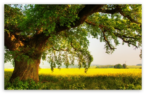 Oak Tree HD wallpaper for Wide 16:10 5:3 Widescreen WHXGA WQXGA WUXGA WXGA WGA ; HD 16:9 High Definition WQHD QWXGA 1080p 900p 720p QHD nHD ; UHD 16:9 WQHD QWXGA 1080p 900p 720p QHD nHD ; Standard 4:3 5:4 3:2 Fullscreen UXGA XGA SVGA QSXGA SXGA DVGA HVGA HQVGA devices ( Apple PowerBook G4 iPhone 4 3G 3GS iPod Touch ) ; Tablet 1:1 ; iPad 1/2/Mini ; Mobile 4:3 5:3 3:2 16:9 5:4 - UXGA XGA SVGA WGA DVGA HVGA HQVGA devices ( Apple PowerBook G4 iPhone 4 3G 3GS iPod Touch ) WQHD QWXGA 1080p 900p 720p QHD nHD QSXGA SXGA ;