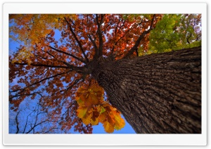 Oak Tree HDR Autumn HD Wide Wallpaper for 4K UHD Widescreen desktop & smartphone