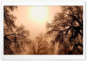 Oak Trees In Morning Mist California HD Wide Wallpaper for Widescreen