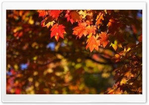 October in Japan HD Wide Wallpaper for Widescreen