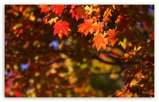 October in Japan HD wallpaper for Standard 4:3 5:4 Fullscreen UXGA XGA SVGA QSXGA SXGA ; Wide 16:10 5:3 Widescreen WHXGA WQXGA WUXGA WXGA WGA ; HD 16:9 High Definition WQHD QWXGA 1080p 900p 720p QHD nHD ; Other 3:2 DVGA HVGA HQVGA devices ( Apple PowerBook G4 iPhone 4 3G 3GS iPod Touch ) ; Mobile VGA WVGA iPhone iPad PSP Phone - VGA QVGA Smartphone ( PocketPC GPS iPod Zune BlackBerry HTC Samsung LG Nokia Eten Asus ) WVGA WQVGA Smartphone ( HTC Samsung Sony Ericsson LG Vertu MIO ) HVGA Smartphone ( Apple iPhone iPod BlackBerry HTC Samsung Nokia ) Sony PSP Zune HD Zen ; Tablet 2 Android 3 DVGA HVGA HQVGA devices ( Apple PowerBook G4 iPhone 4 3G 3GS iPod Touch ) ; Dual 4:3 5:4 16:10 5:3 16:9 UXGA XGA SVGA QSXGA SXGA WHXGA WQXGA WUXGA WXGA WGA WQHD QWXGA 1080p 900p 720p QHD nHD ;