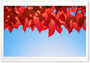 October Leaves HD Wide Wallpaper for Widescreen