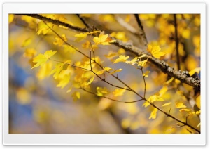October Yellow Leaves HD Wide Wallpaper for Widescreen
