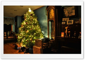Oh Christmas Tree HD Wide Wallpaper for Widescreen