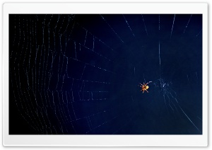 Oh What A Tangled Web We Weave HD Wide Wallpaper for Widescreen