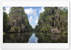 Okefenokee Swamp HD Wide Wallpaper for Widescreen