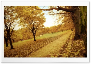 Old Autumn Days HD Wide Wallpaper for Widescreen