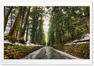 Old Forest Alley HD Wide Wallpaper for Widescreen