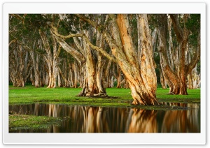 Old Trees Swamp HD Wide Wallpaper for 4K UHD Widescreen desktop & smartphone