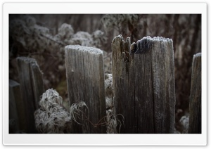 Old Wooden Fence HD Wide Wallpaper for Widescreen