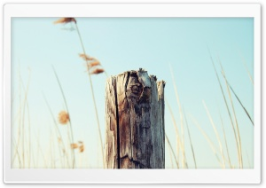 Old Wooden Post HD Wide Wallpaper for Widescreen