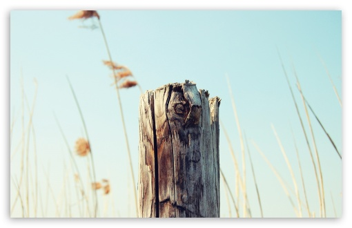 Old Wooden Post ❤ 4K UHD Wallpaper for Wide 16:10 5:3 Widescreen WHXGA WQXGA WUXGA WXGA WGA ; 4K UHD 16:9 Ultra High Definition 2160p 1440p 1080p 900p 720p ; Standard 4:3 5:4 3:2 Fullscreen UXGA XGA SVGA QSXGA SXGA DVGA HVGA HQVGA ( Apple PowerBook G4 iPhone 4 3G 3GS iPod Touch ) ; Tablet 1:1 ; iPad 1/2/Mini ; Mobile 4:3 5:3 3:2 16:9 5:4 - UXGA XGA SVGA WGA DVGA HVGA HQVGA ( Apple PowerBook G4 iPhone 4 3G 3GS iPod Touch ) 2160p 1440p 1080p 900p 720p QSXGA SXGA ;