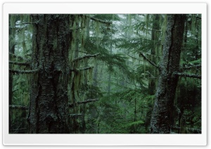 Olympic National Forest HD Wide Wallpaper for Widescreen