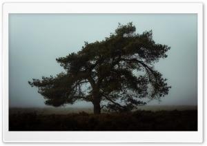 One Tree, Fog, Landscape, Gloomy Ultra HD Wallpaper for 4K UHD Widescreen desktop, tablet & smartphone