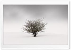 One Tree in the Middle of a Snow Field HD Wide Wallpaper for 4K UHD Widescreen desktop & smartphone