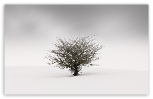One Tree in the Middle of a Snow Field ❤ 4K UHD Wallpaper for Wide 16:10 5:3 Widescreen WHXGA WQXGA WUXGA WXGA WGA ; 4K UHD 16:9 Ultra High Definition 2160p 1440p 1080p 900p 720p ; Standard 4:3 5:4 3:2 Fullscreen UXGA XGA SVGA QSXGA SXGA DVGA HVGA HQVGA ( Apple PowerBook G4 iPhone 4 3G 3GS iPod Touch ) ; Smartphone 16:9 3:2 5:3 2160p 1440p 1080p 900p 720p DVGA HVGA HQVGA ( Apple PowerBook G4 iPhone 4 3G 3GS iPod Touch ) WGA ; Tablet 1:1 ; iPad 1/2/Mini ; Mobile 4:3 5:3 3:2 16:9 5:4 - UXGA XGA SVGA WGA DVGA HVGA HQVGA ( Apple PowerBook G4 iPhone 4 3G 3GS iPod Touch ) 2160p 1440p 1080p 900p 720p QSXGA SXGA ;