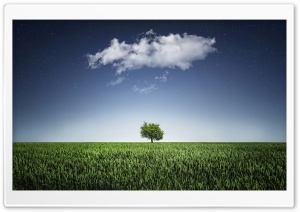 One Tree, One Cloud HD Wide Wallpaper for Widescreen