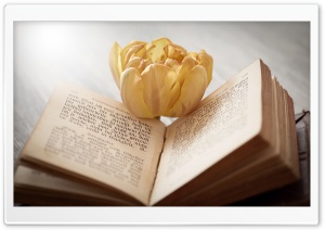Open Book Macro Ultra HD Wallpaper for 4K UHD Widescreen desktop, tablet & smartphone
