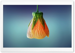 Orange Bell Flower HD Wide Wallpaper for Widescreen