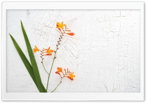 Orange Crocosmia Flower HD Wide Wallpaper for 4K UHD Widescreen desktop & smartphone